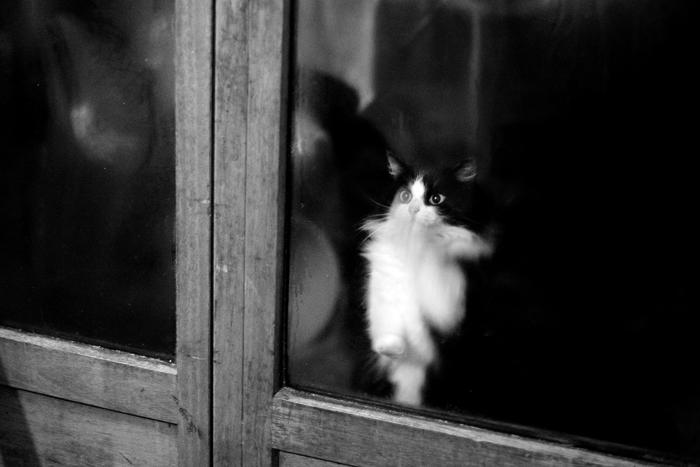 Le chat cherche à rentrer