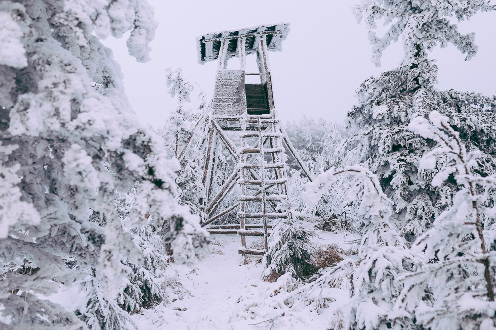 Ambiance glaciale dans les forêts d'Altenberg dans le district de Dresden en Allemagne le 4 février 2014.